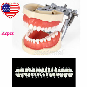 Kilgore Nissin 200 Type Dental Typodont Model With Removable Teeth 32pcs