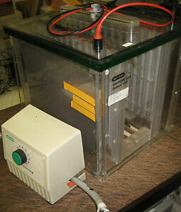 Bio rad Protean Plus Dodeca Cell With Buffer Recirculation Pump