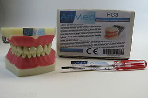 Dental Typodont Dental Practice Study Model Fg3 Artmed