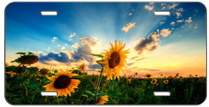 Custom License Plate Sunset Sunflower Auto Tag