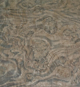 Walnut Burl Wood Veneer 17 X 42 Raw Veneer No Backing Aaa Quality Grade 1 42