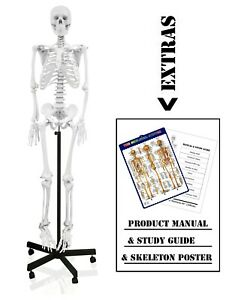 Parco Scientific Pb00010 Full Size Human Skeleton Life Size 66