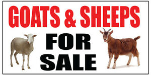 Goats Sheeps For Sale Banner Advertising Sign Full Color 2x6 2x8 3x10 Farm