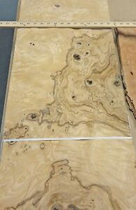 Olive Ash Burl Wood Veneer 13 X 31 Raw With No Backing 1 42 Thickness aa