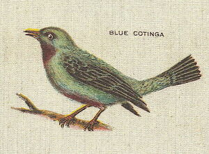 Vintage Tobacco Cigarette Silk Use In Crazy Quilt Bird Blue Cotinga Nj