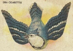 Vintage Antique Tobacco Cigarette Silk Use In Crazy Quilt Bird Blue Jay