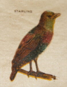 Vintage Tobacco Cigarette Silk Use In Crazy Quilt Bird Starling