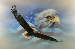 American Flag Soaring Bald Eagle Mural Rv Trailer Wall Decal Decals Graphics