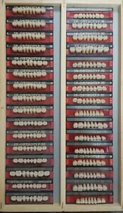 Lot X 32 Dental Lab Acrylic Teeth Dentures Vivadent Ivoclar Sr Orthotyp Pe 4d 1