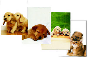 Two Pocket Folders Printed Dogs cats 9 25 X 11 25 Case Pack 48