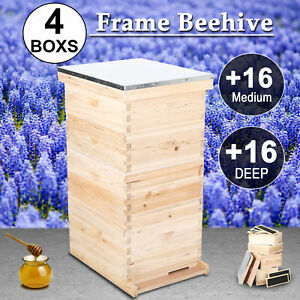 8 Frame Bee Hive 4 Box With Frames Wax Coated Foundations W Queen Extruder Et