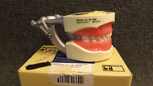 Kilgore D75shp 920 Silicone Full Primary Dentition Tooth Model New Typodont 200