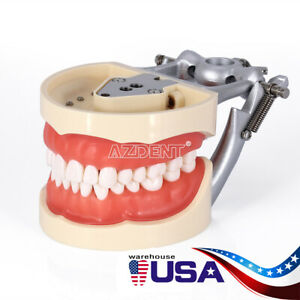 Usa Kilgore Nissin 200 Type Dental Lab Typodont Model removable Teeth Teach Tool