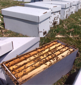 Local Pick Up Only Deposit For Nuc W Bees Queen