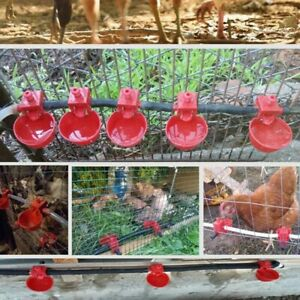 Plastic Chicken Quail Duck Waterer Bowls Automatic Feeder Drinking Cups 6 5x4cm