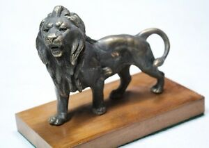 Interesting Old Male Lion French Bronze Figure 16 X 14 X 5 Cm