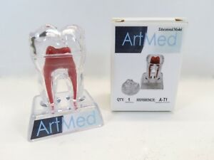 Dental Molar Tooth Practice 3 Model Crystal Base Artmed