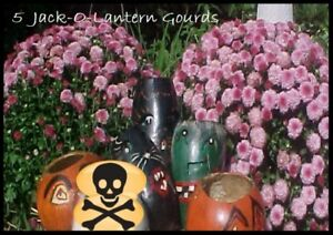 Lot Of 5 Jack O Lantern Gourds Dried Natural Painted Black Cats