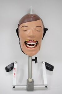 Dental School X ray Trainer Dxttr Iii Mannequin Adult Size Natural Head Dexter