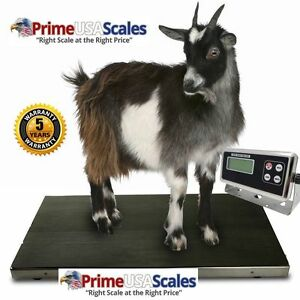 Heavy Duty 500 X 0 2 Lb Veterinary Or Industrial Freight Scale Livestock Scale