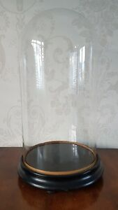 Large Victorian Glass Clock Dome Taxidermy Case On Ebonised Base