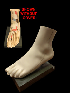 Vintage Foot Model Removable Cover Shows Bone More Great Piece