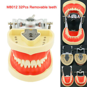 Kilgore Nissin 200 Compatible Dental Typodont Model With Removable Teeth 8012