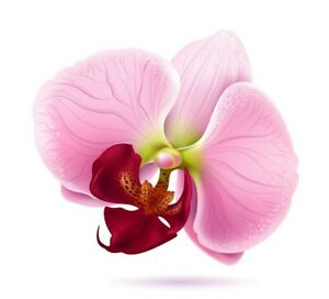 Pink Orchid Decal 3m Usa Made Flowers Sticker Car Truck Window Bumper Wall