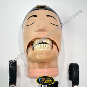 Dental School Training Head Manikin Dxttr Plastic Skull Simulator Training Aide