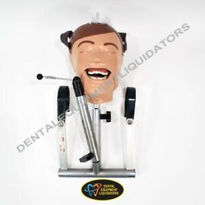 Dental School Training Head Manikin Dxttr Natural Skull Simulator Training Aide