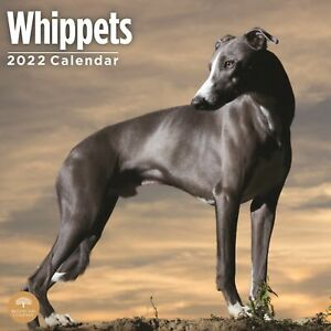 2022 Whippets Wall Calendar By Bright Day 12 X 12 Inch