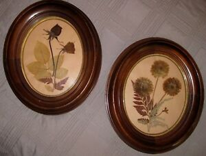 Pair Of Matching Antique Oval Walnut Vintage Frames Glass With Dried Flowers