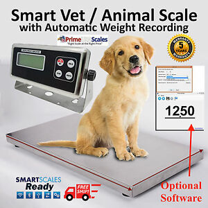 Livestock Scale Hog Scale Dog Scale Sheep Scale Goat Scale Pig Scale 1 000 Lb