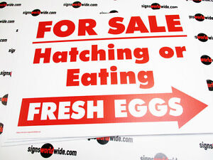 Yard Signs 3 Hatching And Eating Eggs For Sale R w D s Coroplast Signs