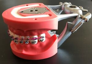 New Nissin Hard Gingiva Jaw Teeth Model Typodont Dental Orthodontics With Braces