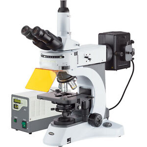 40x 1000x Upright Fluorescence Microscope With Rotating Multi filter Turret