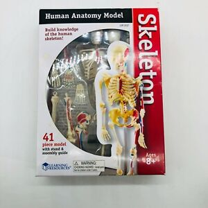 Learning Resources Educational Insights Skeleton Anatomy Model 9 2