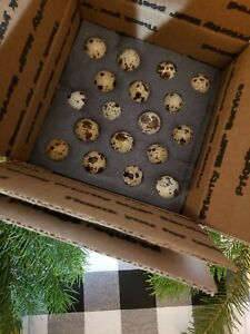 36 Count Mix Coturnix Quail Hatching Eggs With Free Shipping