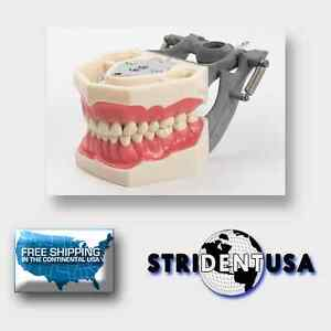 Dental Typodont Fg3 Removable Teeth Frasaco Ag3 Type With Extra Set Of Teeth