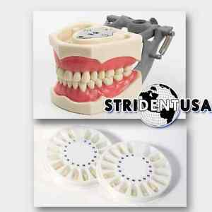 Dental Typodont Om 860 Teaching Model W 1 Extra Set Of Teeth