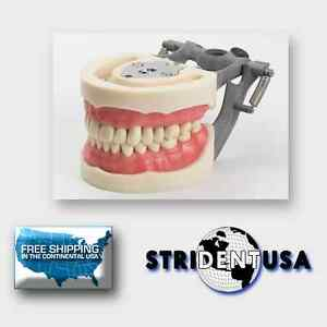 Dental Typodont Model 200 W Removable Teeth Kilgore Nissin Type 10 Free Molars