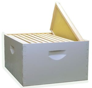 Assembled 2 X 10 Frame Be Hive Kit Painted Wood Frames 9 5 8 Keepers Honey Bees