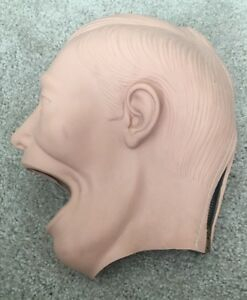 Dental Manikin Shroud Adult Dentoform