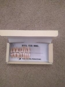 Kilgore Nissin Dental Study Model Anatomical Model Tooth Set Free Shipping