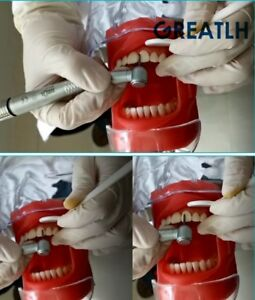 Dental Phantom Head Model With New Style Bench Mount Students Training Model