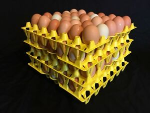 50 Egg Trays chicken Egg Trays Incubator Egg Trays Was 30 Stackable Plastic