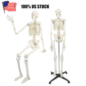 Life Size Anatomical Medical Human Skeleton Model Full Size Kit 180cm 70 8