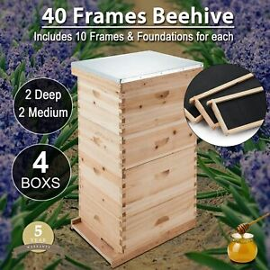 20 Deep 20 Medium Beekeeping Kit Bee Hive House Frame Beehive 40 frame Size