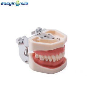 Easyinsmile Dental Tooth Model 200h Type Removable Standard Model Soft Gum 1pack