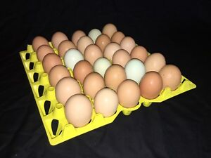 6 Trays Chicken Egg Tray Incubator Hatching Storage Was 30 Plastic Stackable